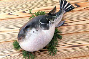 ядовитая рыба фугу фото